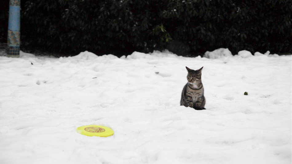 Cat and disc in snow.